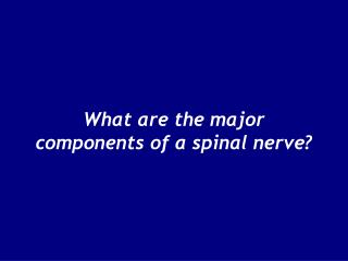 What are the major components of a spinal nerve?