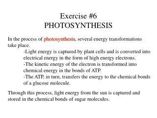 Exercise #6 PHOTOSYNTHESIS