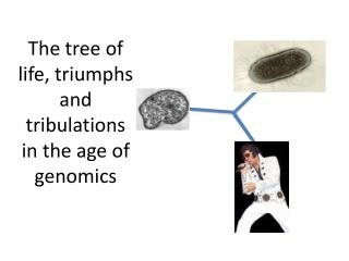 The tree of life, triumphs and tribulations in the age of genomics