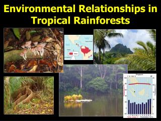Environmental Relationships in Tropical Rainforests