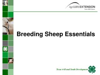 Breeding Sheep Essentials