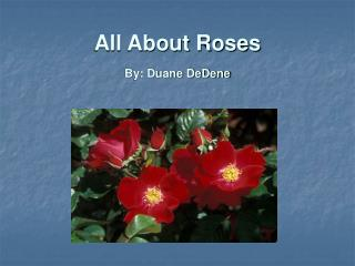 All About Roses By: Duane DeDene