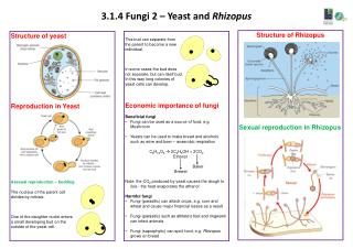 3.1.4 Fungi 2 – Yeast and  Rhizopus