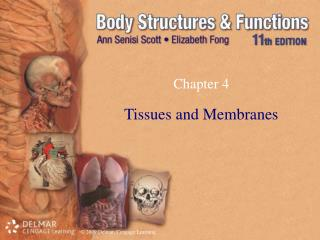 Tissues and Membranes