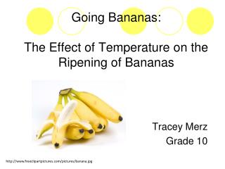 Going Bananas: The Effect of Temperature on the Ripening of Bananas