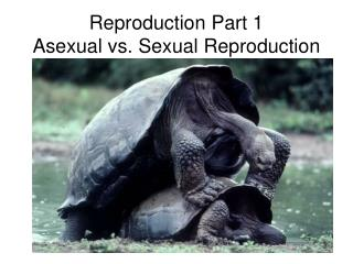 Reproduction Part 1 Asexual vs. Sexual Reproduction