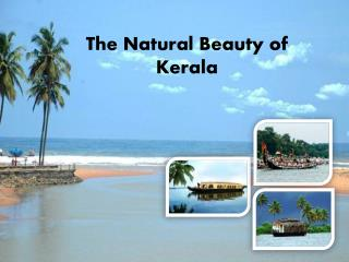 The Natural Beauty of Kerala