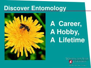 Discover Entomology