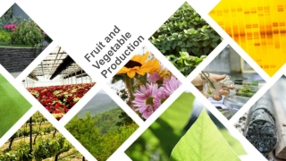 WORLD MARKETS FOR FRESH FRUIT AND VEGETABLES