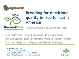 Breeding for nutritional quality in rice for Latin America