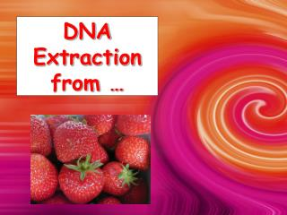 DNA Extraction from