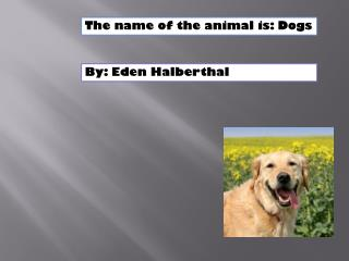 The name of the animal is: Dogs