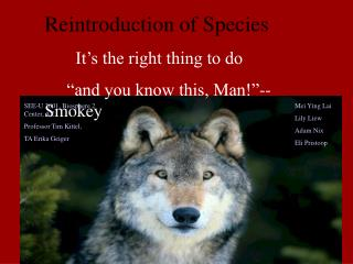 """Reintroduction of Species It's the right thing to do """"and you know this, Man!""""-- Smokey"""