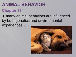 ANIMAL  BEHAVIOR Chapter  31
