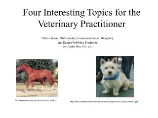 Four Interesting Topics for the Veterinary Practitioner