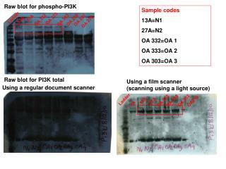 Raw blot for phospho-PI3K