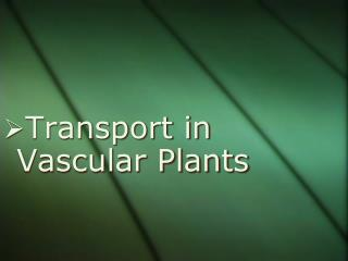 Transport in Vascular Plants