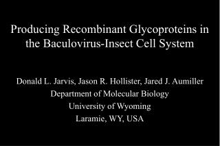 Producing Recombinant Glycoproteins in the Baculovirus-Insect Cell System