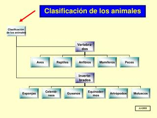 Clasificación de los animales