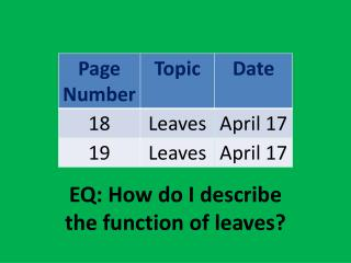 EQ: How do I describe the function of  leaves?