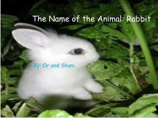 The Name of the Animal: Rabbit