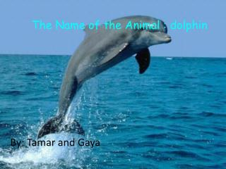 The Name of the Animal : dolphin