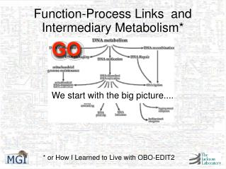 Function-Process Links and Intermediary Metabolism*