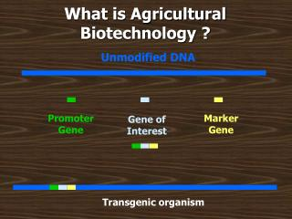 What is Agricultural Biotechnology ?