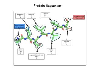 Protein Sequences