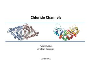 Chloride Channels