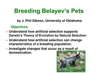 Breeding Belayev's Pets