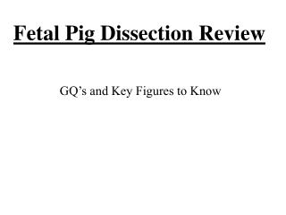 Fetal Pig Dissection Review