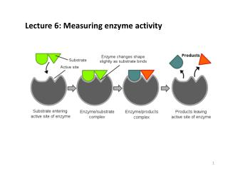 Lecture 6: Measuring enzyme activity