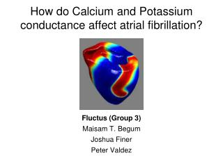 How do Calcium and Potassium conductance affect atrial fibrillation?