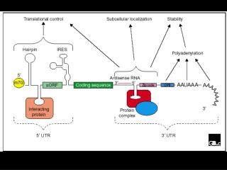 Summary of methods to assess mRNA stability in eukaryotic cells