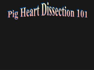 Pig Heart Dissection 101