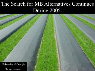 The Search for MB Alternatives Continues During 2005.