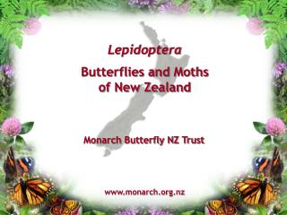 Lepidoptera Butterflies and Moths of New Zealand