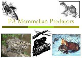 PA Mammalian Predators