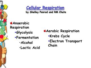 Cellular Respiration by Shelley Penrod and RM Chute