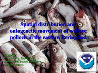Spatial distribution and ontogenetic movement of walleye pollock in the eastern Bering Sea