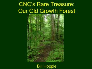 CNC's Rare Treasure: Our Old Growth Forest