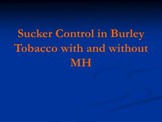 Sucker Control in Burley Tobacco with and without MH