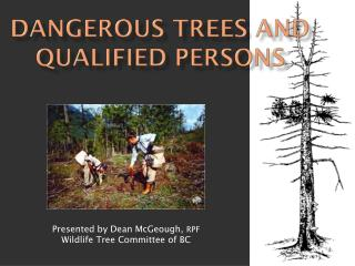 Dangerous Trees and Qualified Persons