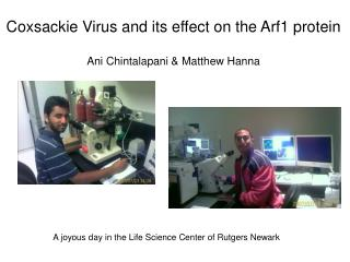 Coxsackie Virus and its effect on the Arf1 protein Ani Chintalapani & Matthew Hanna