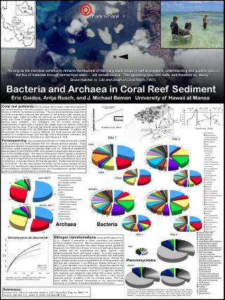 Bacteria and Archaea in Coral Reef Sediment