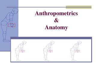 Anthropometrics & Anatomy