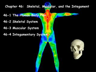 Chapter 46:  Skeletal, Muscular, and the Integument