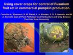 Using cover crops for control of Fusarium fruit rot in commercial pumpkin production.  Christian A. Wyenandt, R. M. Ried
