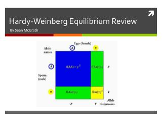 Hardy-Weinberg Equilibrium Review